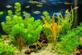 「自宅で楽しむ趣味「アクアリウム」を始めよう! 初心者でも大丈夫。人気の熱帯魚と飼い方のポイント」のアイキャッチ画像