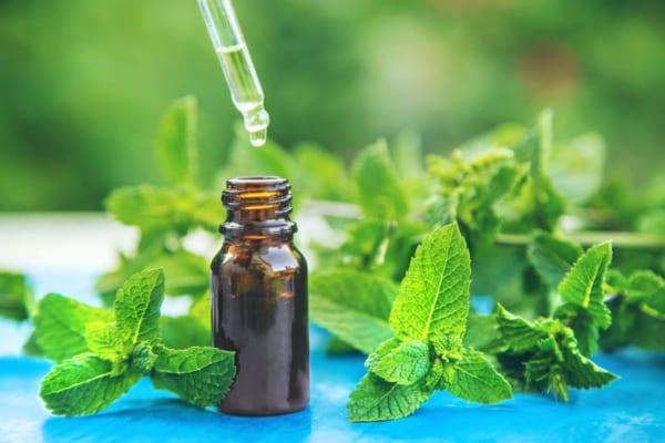 「アウトドアを快適にする「ハッカ油」。虫除け、抗菌、消臭など便利で役立つ使い方!」のアイキャッチ画像